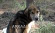 Κακοποιημένα ζώα δεμένα στο δάσος στο Μερκοβούνι - Νεκρός ένας σκύλος σε άθλια κατάσταση ενας ακόμη